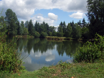 A beautiful summer's day at Woodpecker - Fishing Lakes France